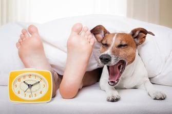 sleep-related-empolyee-benefits.jpg