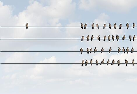 image of a pigeon sitting alone on a wire next to a group of pigeons sitting on the right.