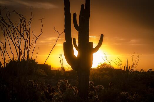 arizona sunset backlighting a cactus.