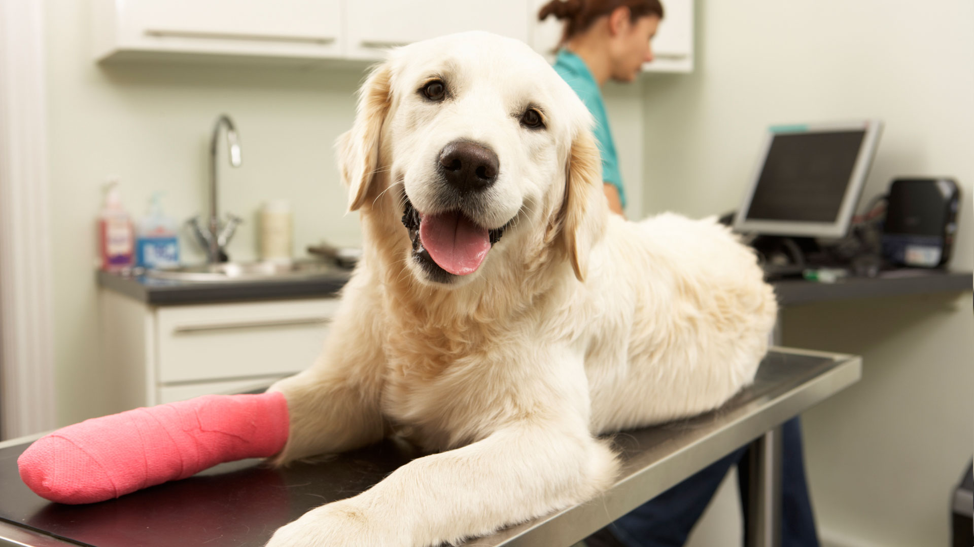 Employers Are Joining The Pack With Pet Insurance - Featured Image