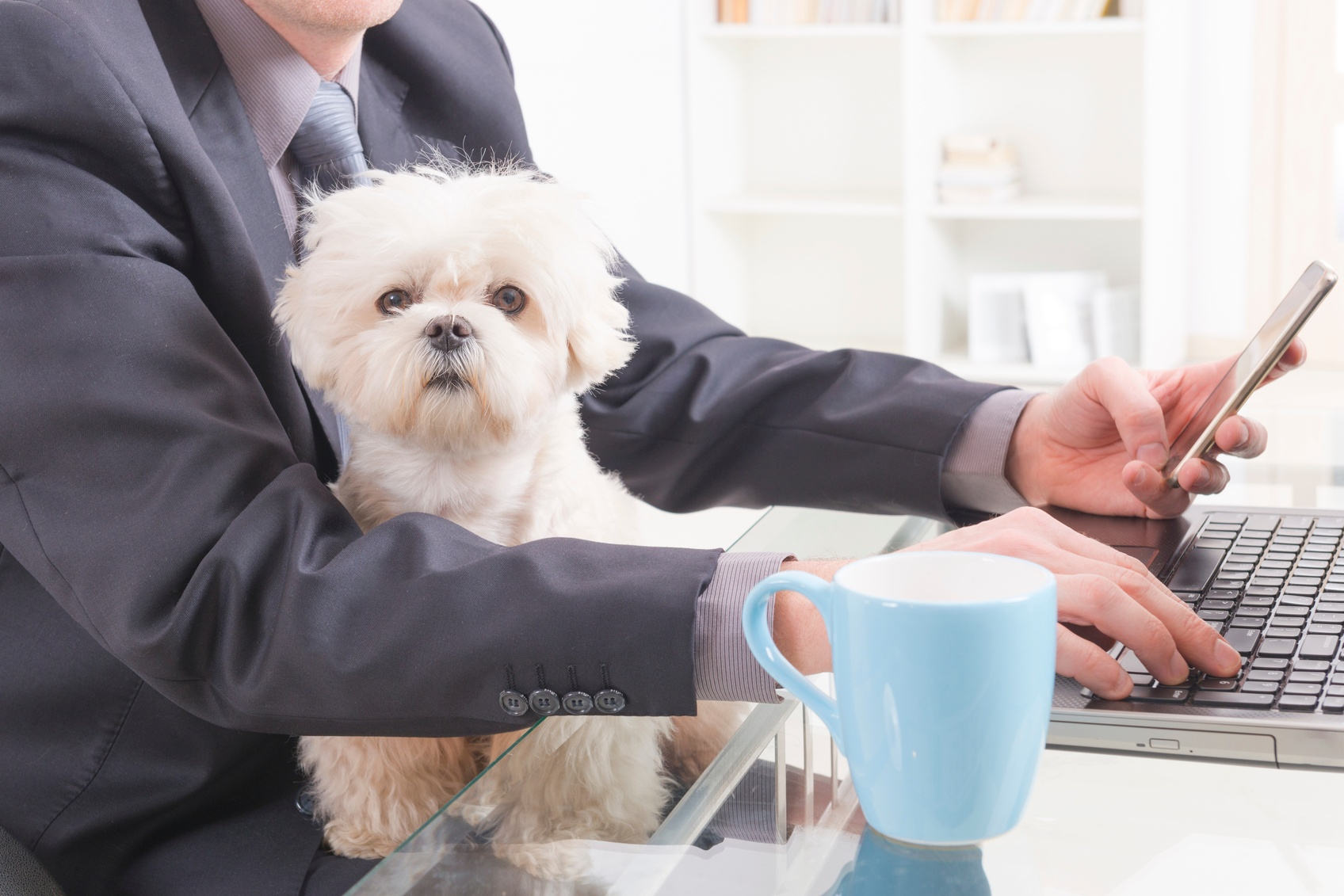 More Companies Are Welcoming Pets at Work (& Insuring Them Too) - Featured Image